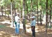 Mediciones forestales