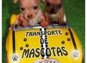 Taxi para mascotas / traslado de mascotas