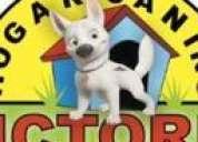 Voluntario para hogar de perros de la calle