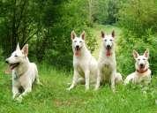 Adiestrador  de perros en tucuman