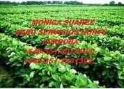 Necesito campos agricolas a la venta