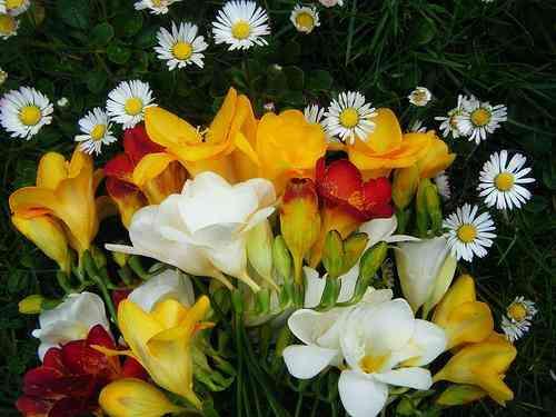 Plantas flores vivero delivery en villa del parque fresias for Viveros en capital federal