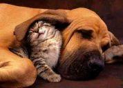 Busco contactar personas que amen los animales !
