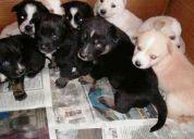 Eres voluntario para adoptar un perrito/a?