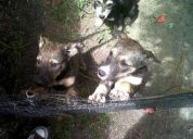 Cachorritas en adopcion! de 4 meses de edad, llamar al 1549178235