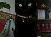 Perdi a mi gatito , si me pueden ayudar a encontrarlo .