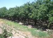 Excelente fina de 7 hectáreas con producción y casa