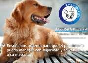 Adiestramiento canino a domicilio (zona sur)