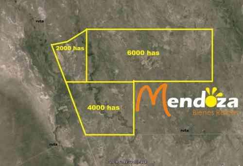 Campo en su totalidad de 12085 hectáreas o posibilidad de fracciones mas pequeñas