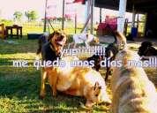 Huellita guarderia y peluqueria canina